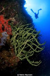 Papua wall with diver taken with Canon 400D/Hugyfot by Patrick Neumann 